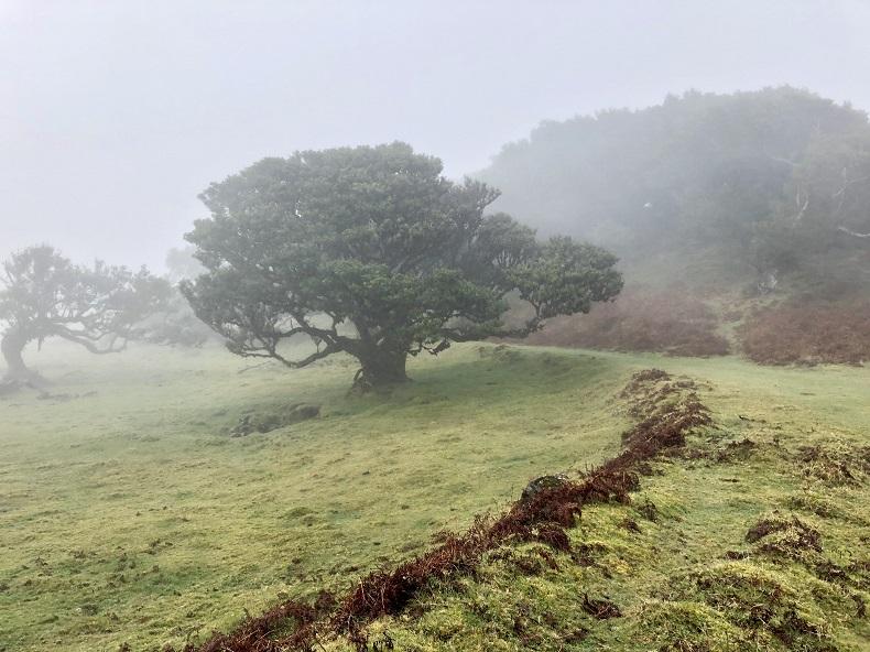 Die Kraft der Natur als Ausgleich. Foto: N. Gatz